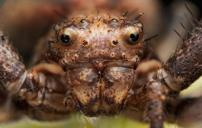 На Земле началось массовое вымирание насекомых
