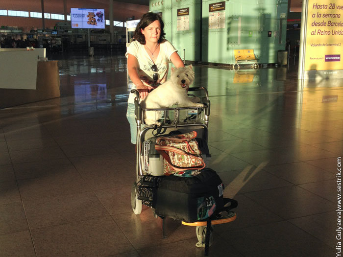 Какие бюджетные авиакомпании разрешают брать собаку в самолет