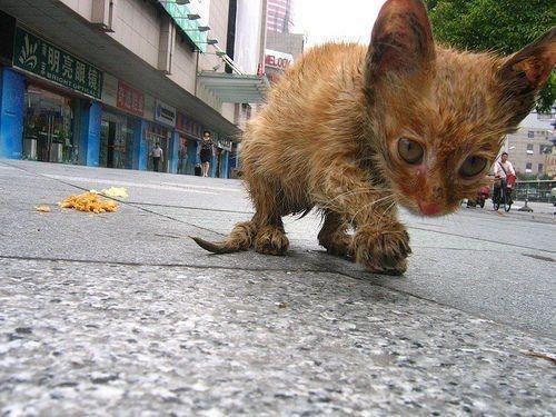 Бездомные кошки живут под окошком...