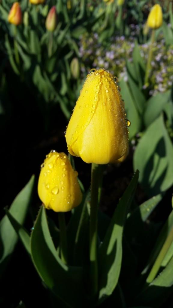 цветы 045