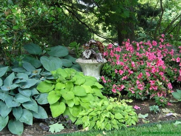 Растения тенистого сада