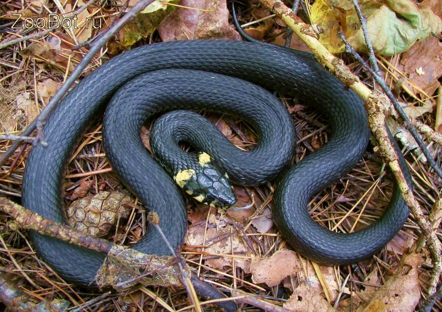 Про змей