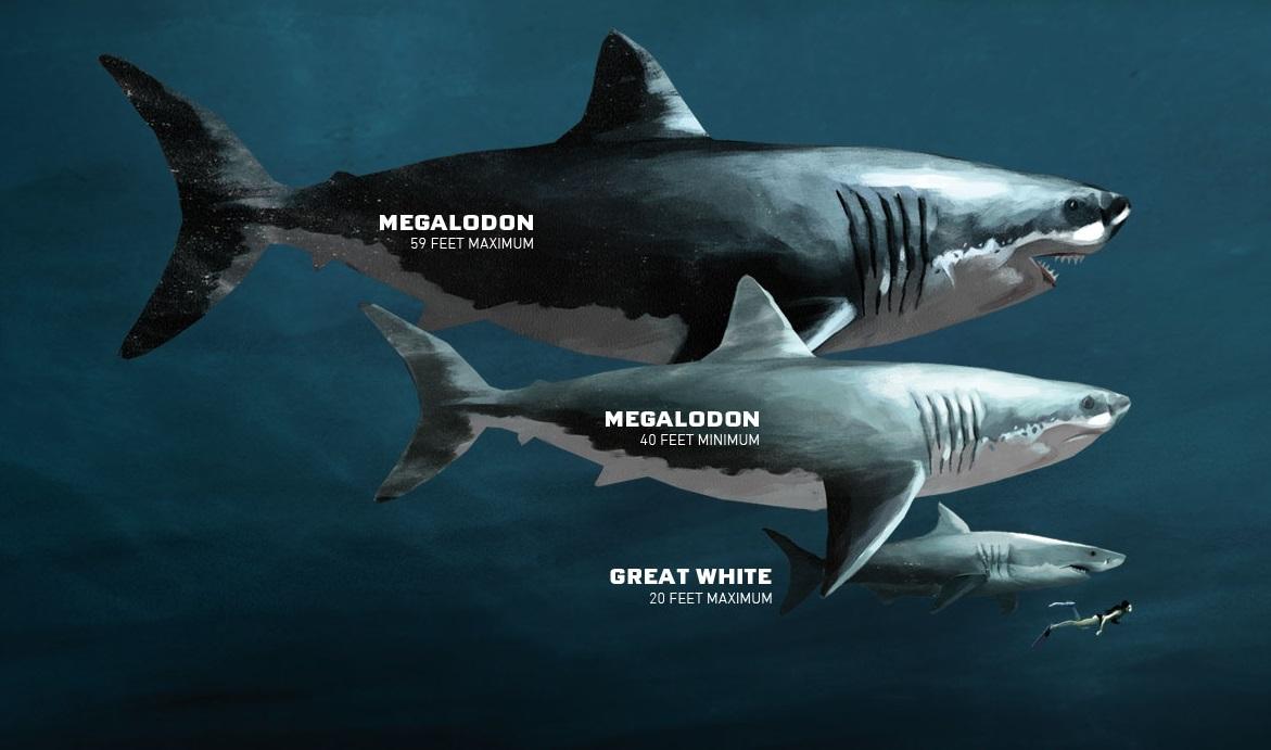 Озвучена новая причина вымирания гигантской акулы мегалодона