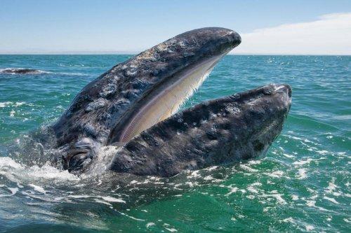 Кого интересуют люди, когда страдает кит