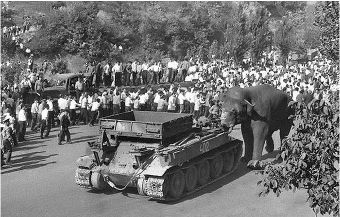 Трагедия в ереванском зоопарке: как люди приручили, а потом безжалостно убили любимца-слона