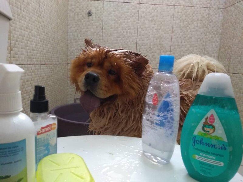 Водные процедуры домашний питомец, животные, милота, подборка, собака, фото