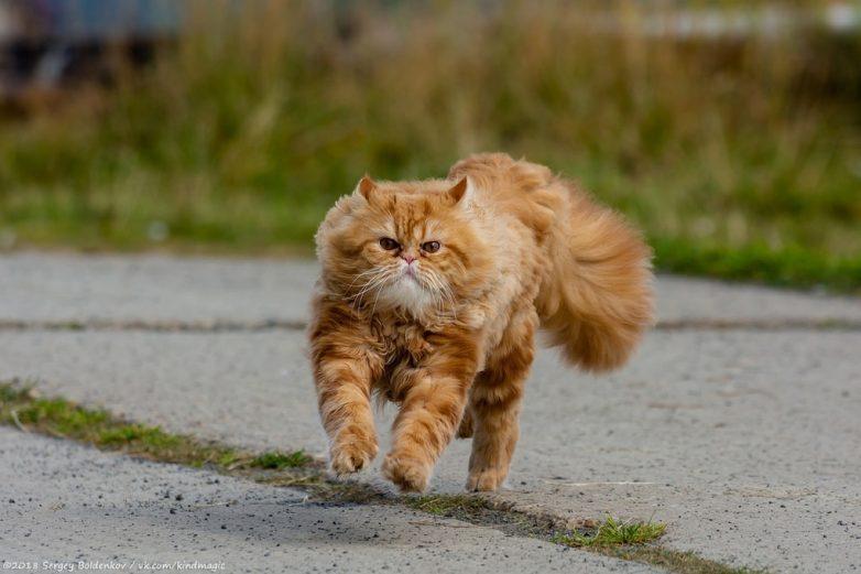 Кот, который неудачно поохотился
