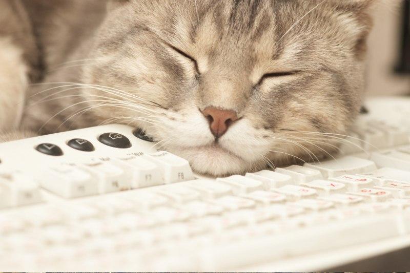 Зачем нужны ждущий и спящий режимы компьютера. Если вы разбили товар до оплаты на кассе.