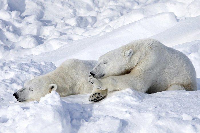 В Антарктиде нет белых медведей Антарктика, антарктида, интересно, ледяной континент, познавательно, секреты Антарктики, удивительно, факты
