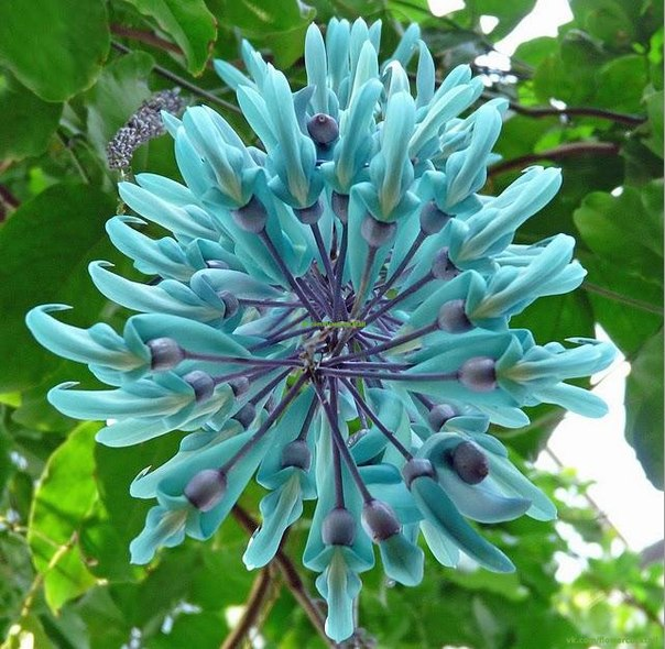 Нефритовый цветок или Изумрудная лиана . Обсуждение на LiveInternet - Российский Сервис Онлайн-Дневников