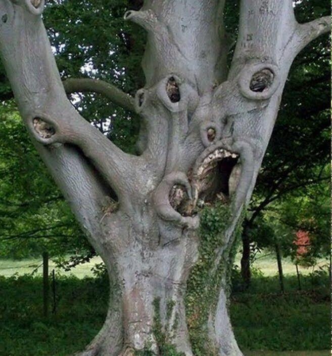 Дерево, которое кричит от ужаса бывает же такое, животные, интересное, природа, растения, ужасы