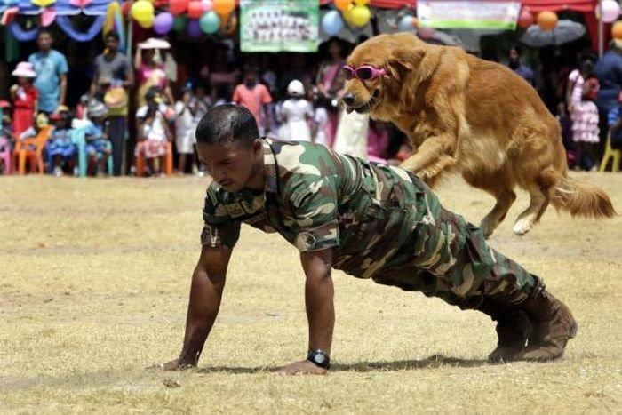 Не в дружбу, а в службу армия, животные, милота, подборка, служба, собака