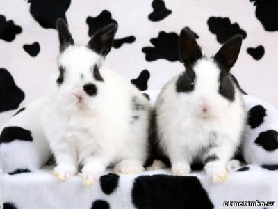 Интерьер к году Кролика - модные цвета