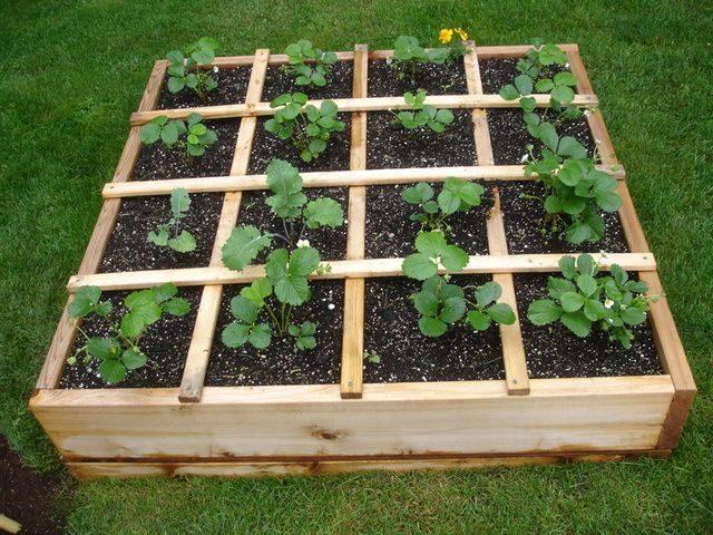 5 главных нюансов, которые помогут вырастить тонну клубники