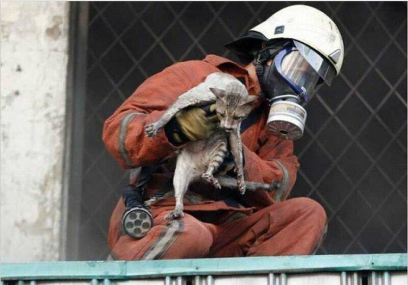Пожарный во время крупного пожара на рынке Senen в Джакарте спас кота добро, доброта, животные, люди, поступок, спасение, человечность