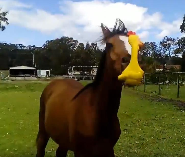 Подари курицу любимому коню! Видео, которое сделает ваш день!