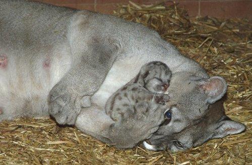 22 тёплые фотографии, доказывающие, что животные созданы из любви