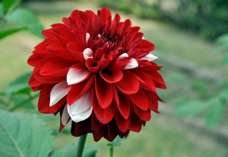 10 полезных цветов и растений у вас на клумбе