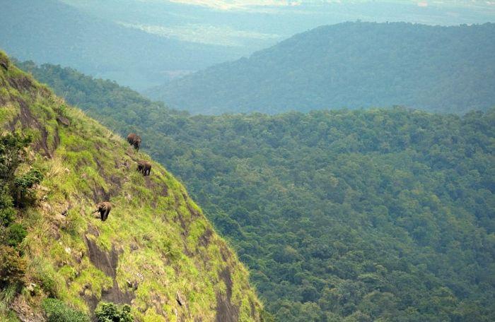 Высоко в горах пасутся слоны