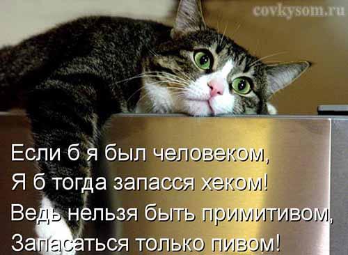 Кулинарные котоматрицы 30 (юмор)
