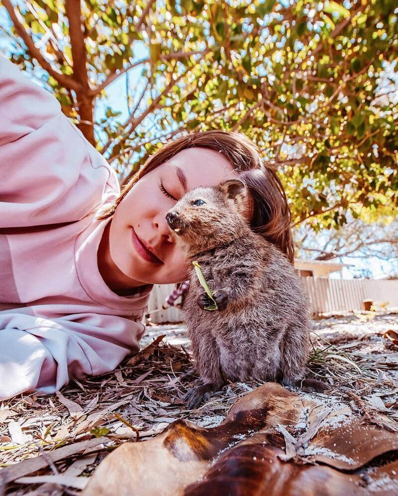 15 снимков жизнерадостных квокк от фотографа из Москвы, которая лишь ради них прилетела в Австралию австралия, квокка, кристина макеева, природа, фото, фотограф