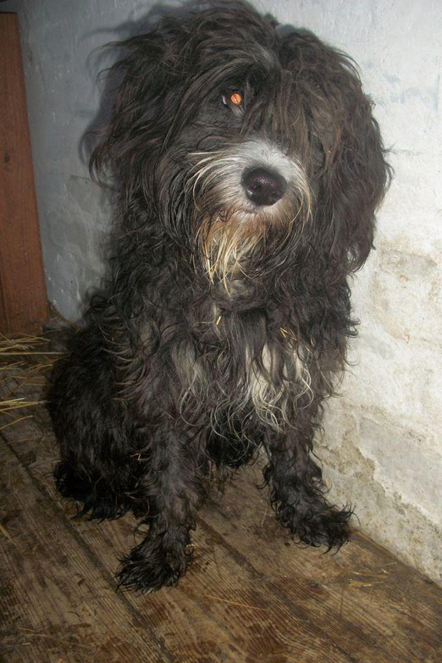 «Он 3 дня не сходил с места!» Красивый пёс-потеряшка превратился в грязный комок, но не ушёл со своего поста