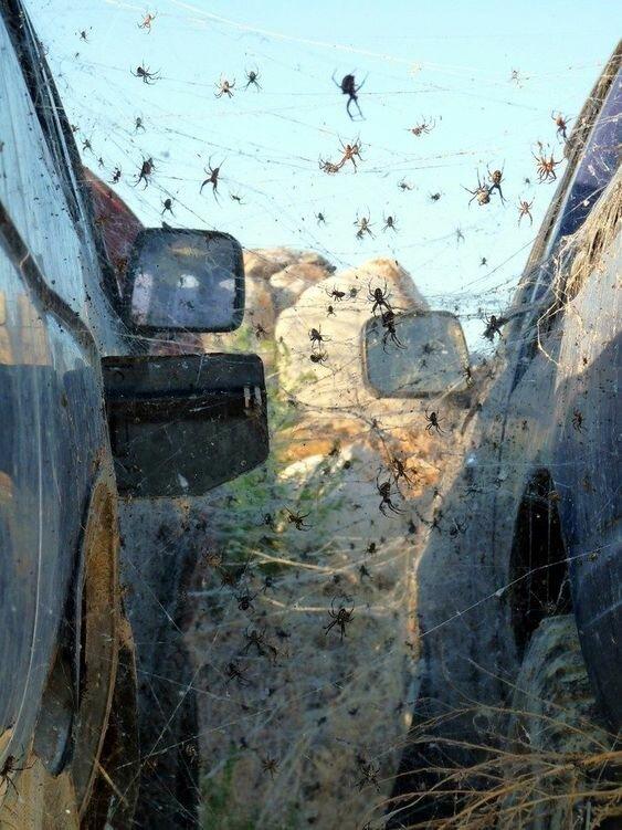 20 ужасов природы, с которыми мало кто пожелал бы встретиться бывает же такое, животные, интересное, природа, растения, ужасы