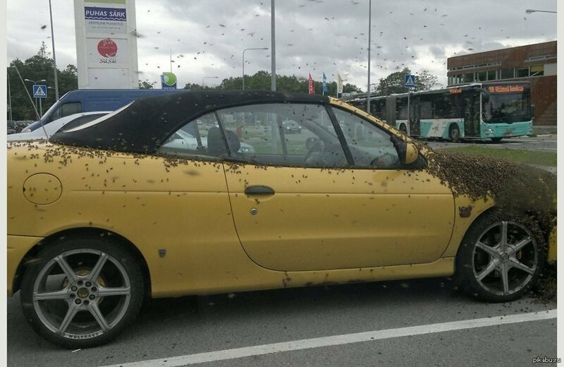 А вот и пчелы, облюбовавшие машину бывает же такое, животные, интересное, природа, растения, ужасы