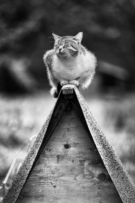Кошки, которым нравятся самые неудобные места
