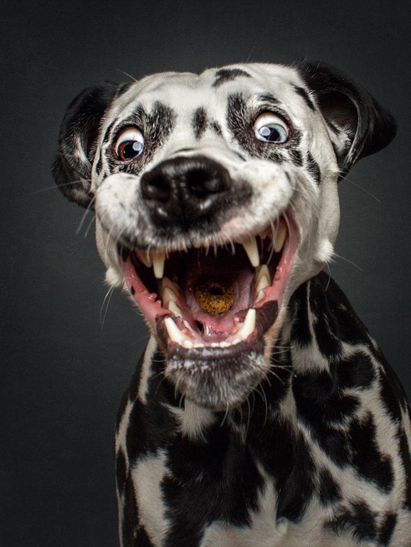 Собаки прикольные картинки фото, дню матери для