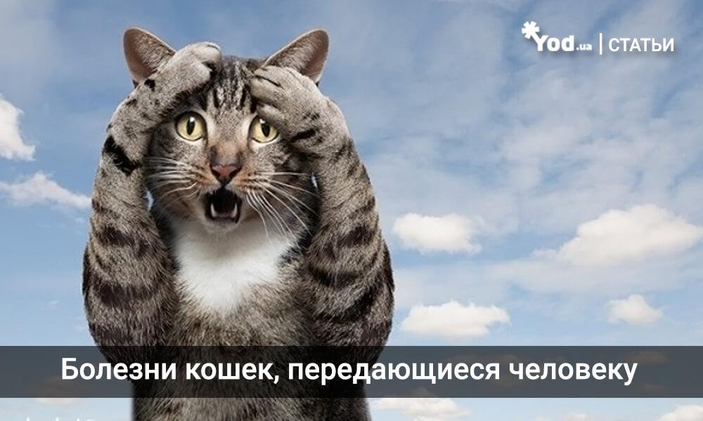 Болезни кошек, передающиеся человеку