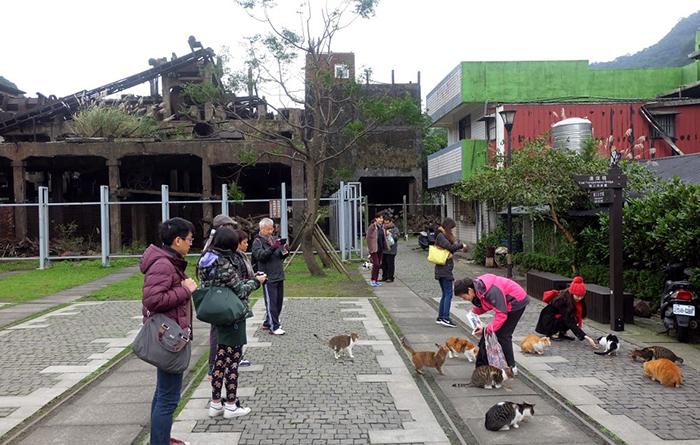 Деревня с кошками.