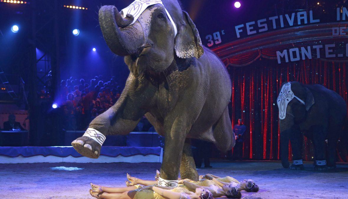 лучших цирк юмор картинки может меняться мягкого