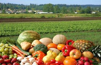 Органическое земледелие – реальный опыт получения сверхурожая