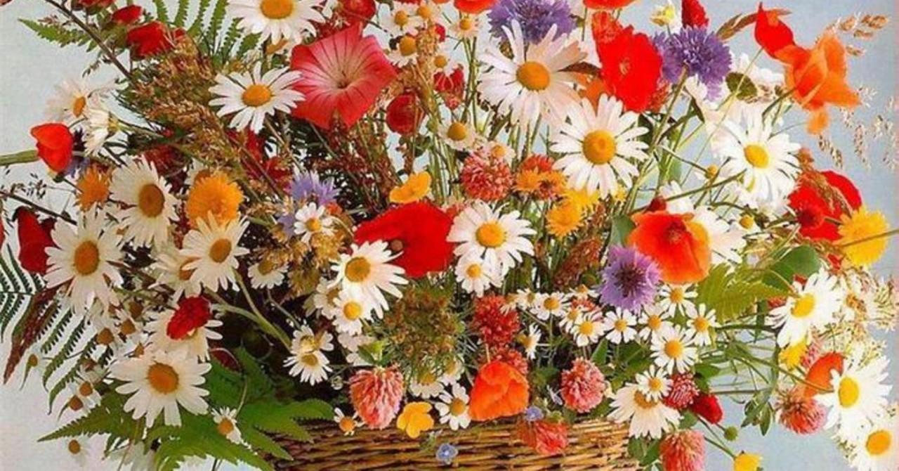 Днем учителя, красивые картинки анимация с полевыми цветами
