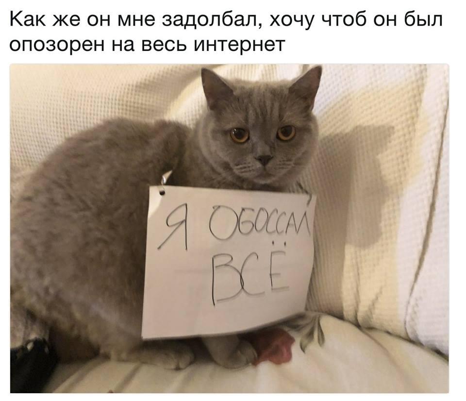 Ну все, Вася, иду бить посуду!