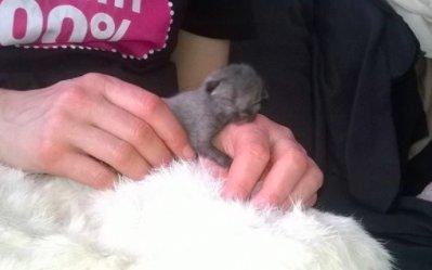 Он был такой крошечный, что был больше похож на мышь, чем на котенка