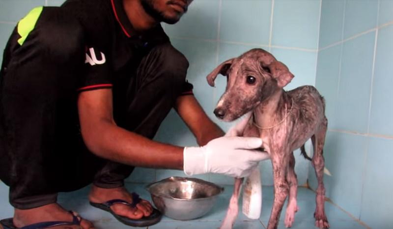 Отощалого и напуганного щенка нашли в пакете. Спустя 6 недель после этого его трудно было узнать!