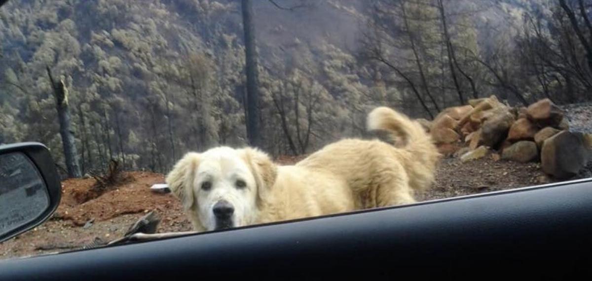 Собака месяц ждала хозяйку на пепелище сгоревшего дома