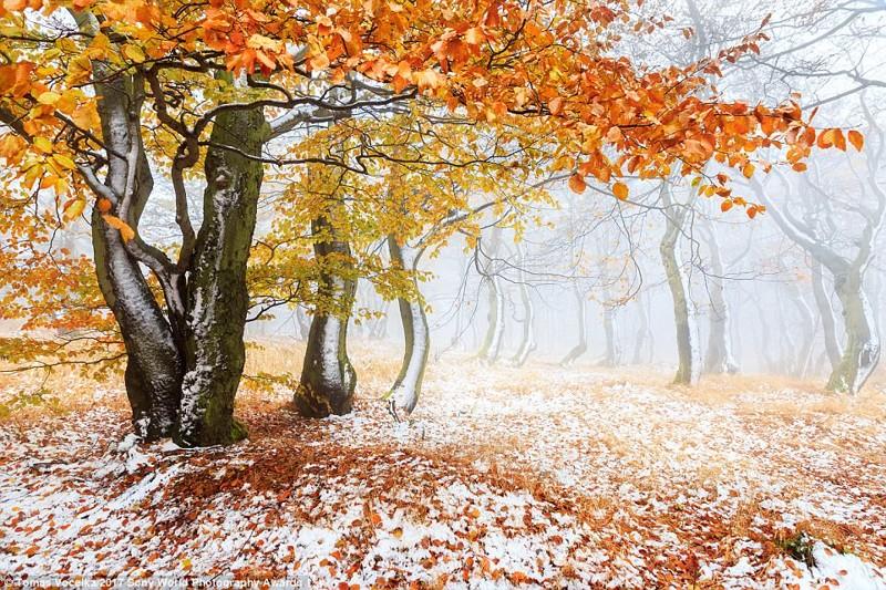 Заснеженный лес в чешских горах искусство, конкурс, красота, фото