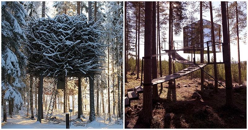И в лесу, и не в палатке: удивительный отель в сосновых лесах Швеции