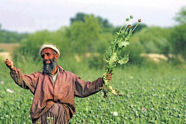 ООН: посевы опиумного мака в Афганистане увеличились на 10% за год