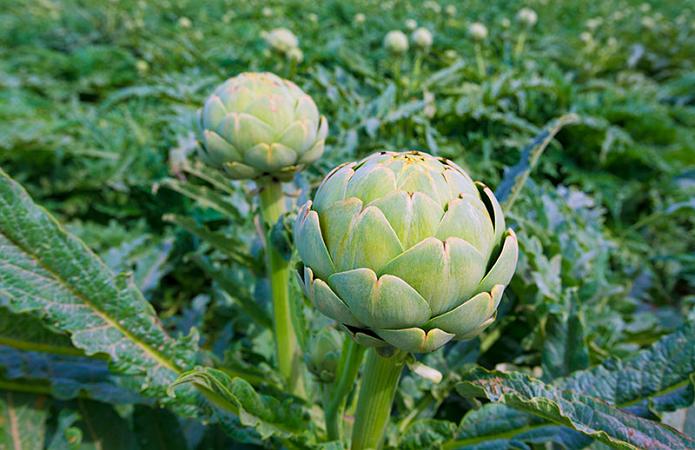 Топ-10 овощей, которые дают урожай ежегодно