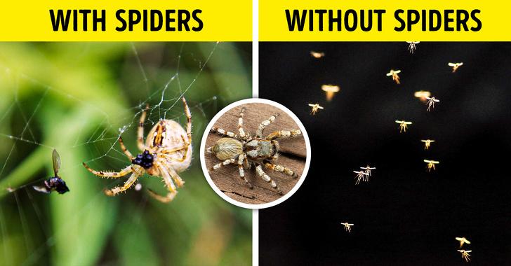 Если бы все насекомые на земле исчезли