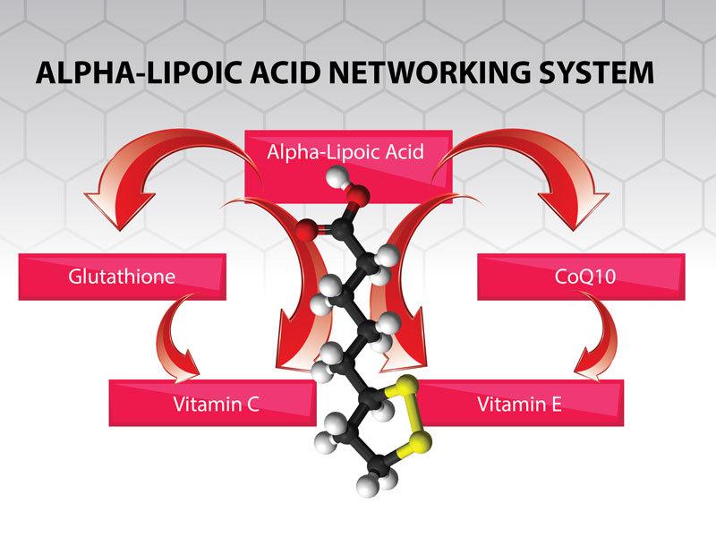 Альфа-липоевая кислота самый сильный антиоксидант