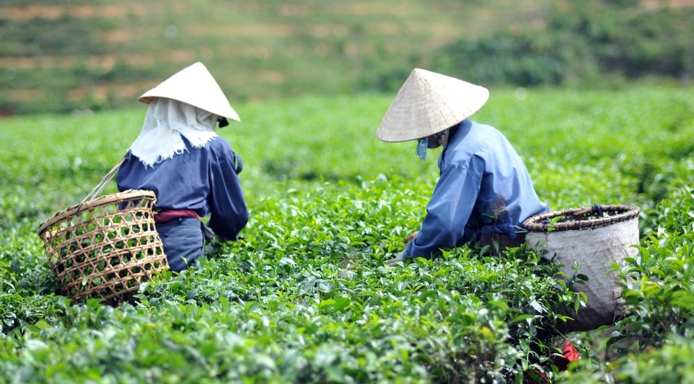 Эхо войны и проверка вашей ловкости: путешествие во Вьетнам