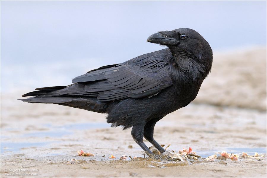 Необычайные интеллектуальные способности животных животные,интеллект,интересное