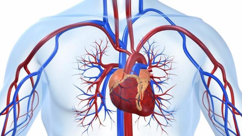 Сердечно-сосудистые заболевания: Коллекция заблуждений
