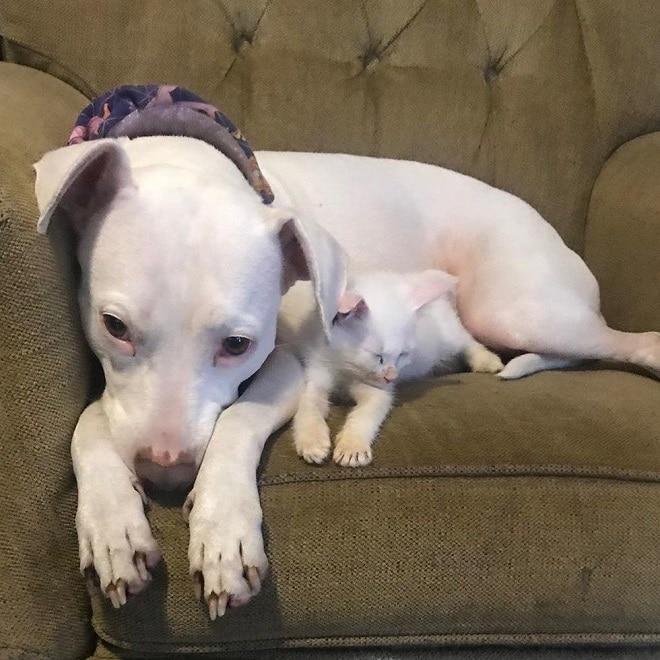 Увидев светлого котенка, белая собака приняла его за своего «ребенка» не всё так грустно