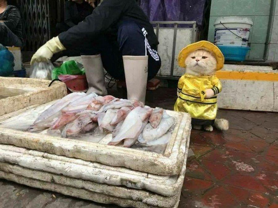 Котэ плохого не посоветует — лучшая реклама рыбы